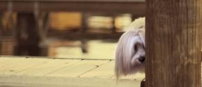 Photolust: Dog is ArtPhotography